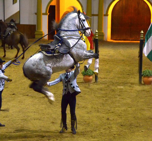 A caballo entre c diz sanlucar y jerez con cena de for Diarios de espectaculos online