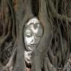 buda del arbol de Ayutthaya